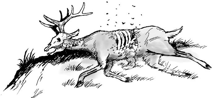 Gospel, p. 4, Deer